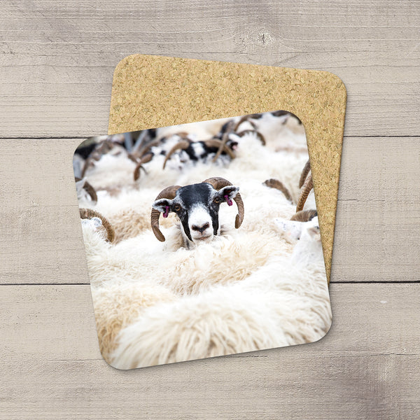 Coaster of Scotland highlands sheep by Larry Jang