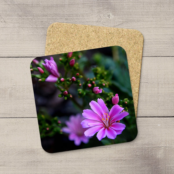 Picture of pink bitterroot flowers printed onto drink coasters by Edmonton photographer Larry Jang.