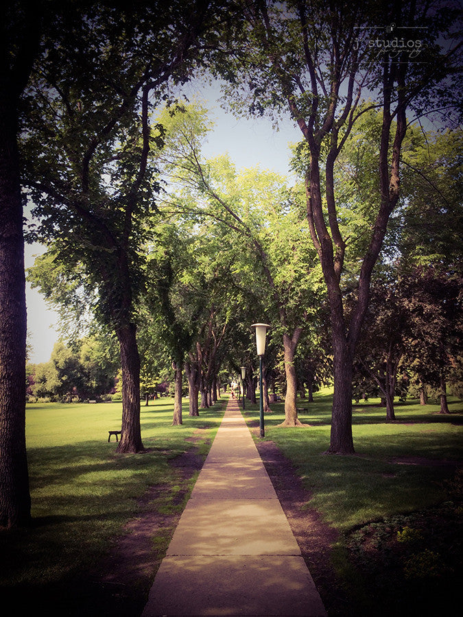 Photograph of a tree lined path on the Alberta Legislature grounds. Urban themed photography.