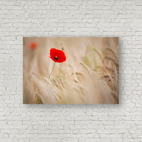 Of Poppies and Barley