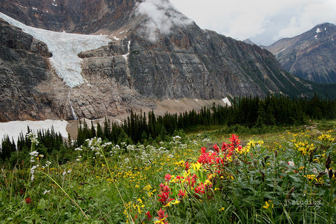 August Bloom is an image of Cavell Meadows and Angel Glacier. Mountain Photography.
