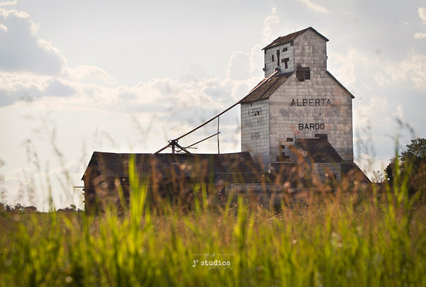 Picture of the Bardo Alberta Wheat Pool grain elevator thru the wild grass.