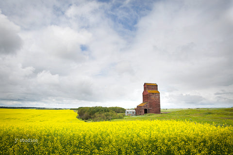 Art print of sweeping canola fields of Alberta with the Butze Grain Elevator standing like a beacon over the Canadian Prairies. Big sky landscape photography.