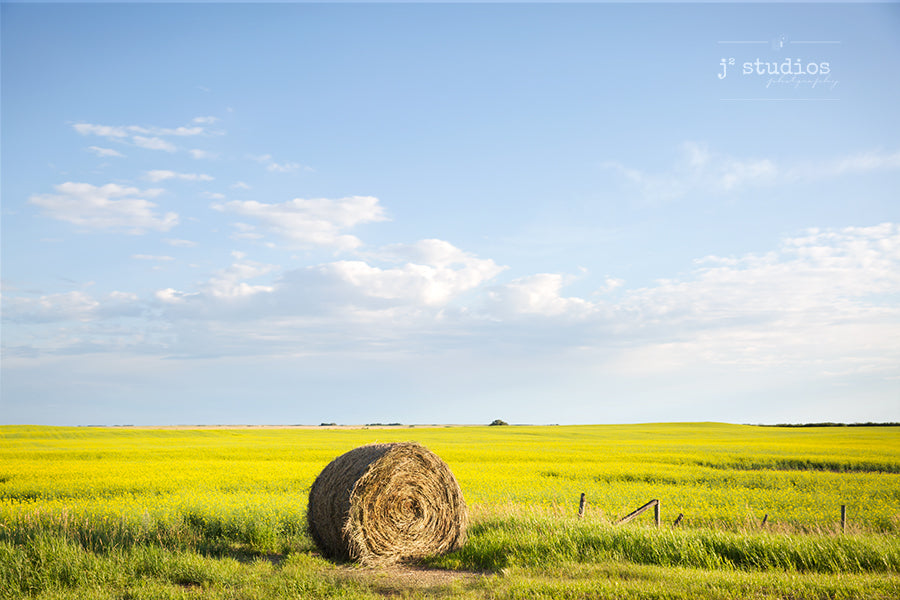 Photograph of a Hay Bale lying on a field of Canola. Prairie Love art print. Rural Photography.
