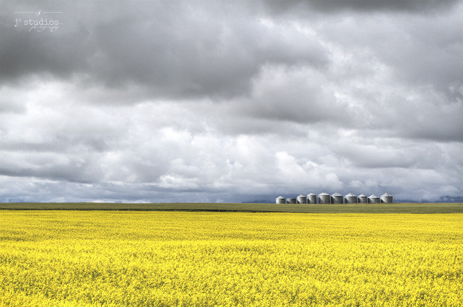 Canola Silo is an art print of a golden sea of canola drifting towards a row of grain silos in Southern Alberta. Landscape Photography.
