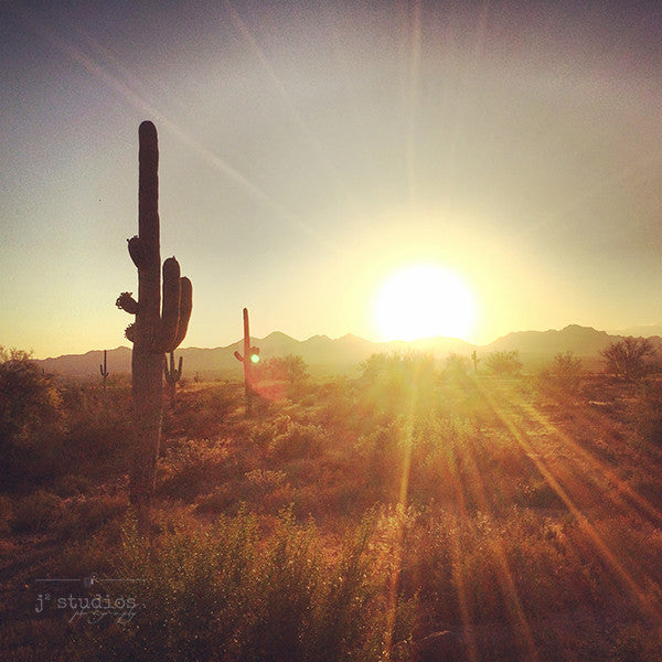 Desert Love is a wanderlust themed art print of the desert in Phoenix Arizona featuring a group of Saguaro cacti. Landscape photography..