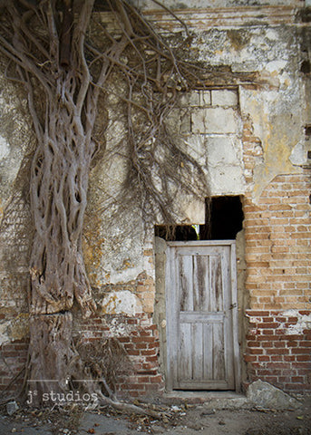 Laying Down the Roots is an image of a door with tree roots growing up the wall in Cuba. Door photography.