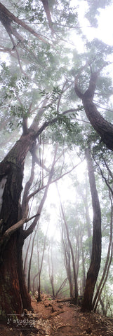 Let's Get Lost is an image of a hiking trail covered in fog in the Kauai forest. Landscape Photography.