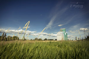 Sentinel Through the Wheat is an image of a Mayerthorpe's grainery through strands of blowing wheat. Grain elevator Photography.