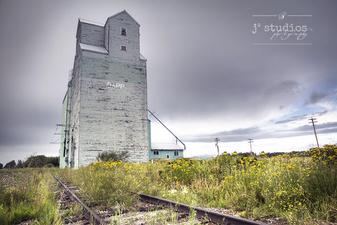 Art print of wild yellow flowers growing at the foot of the train tracks by the Dapp Grain Elevator.