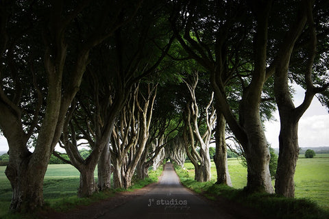 Image of the famous and iconic Beech tree tunnel in County Antrim of Northern Ireland. Landmark photography.