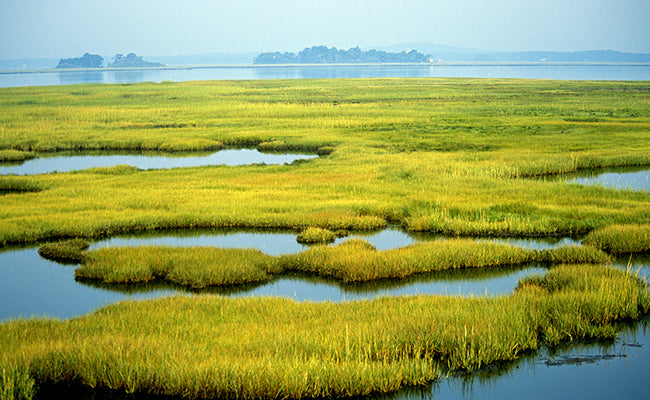 Why Should We Preserve Our Wetlands?
