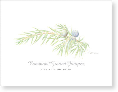 Common Ground Juniper