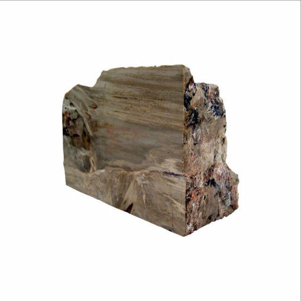 Petrified Wood Specimen Bookend