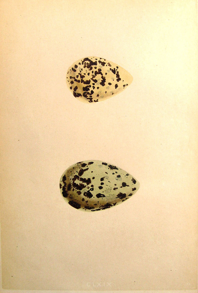 Speckled Green Eggs Lithograph