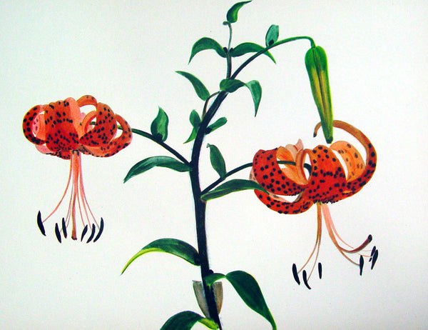 Tiger Lily Lithograph, C. 1950