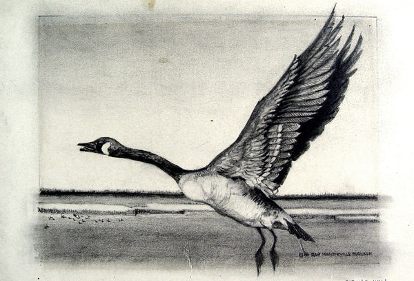 Canadian Goose Pencil Study by Ray Robinson - Artifax antiques & design