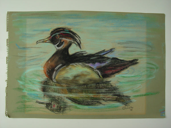 Wood Duck Pastel on Paper