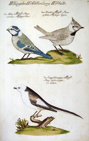 Song Birds Engraving 1733
