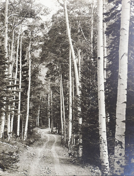 1950's Photograph Of Twining Canyon Aspens