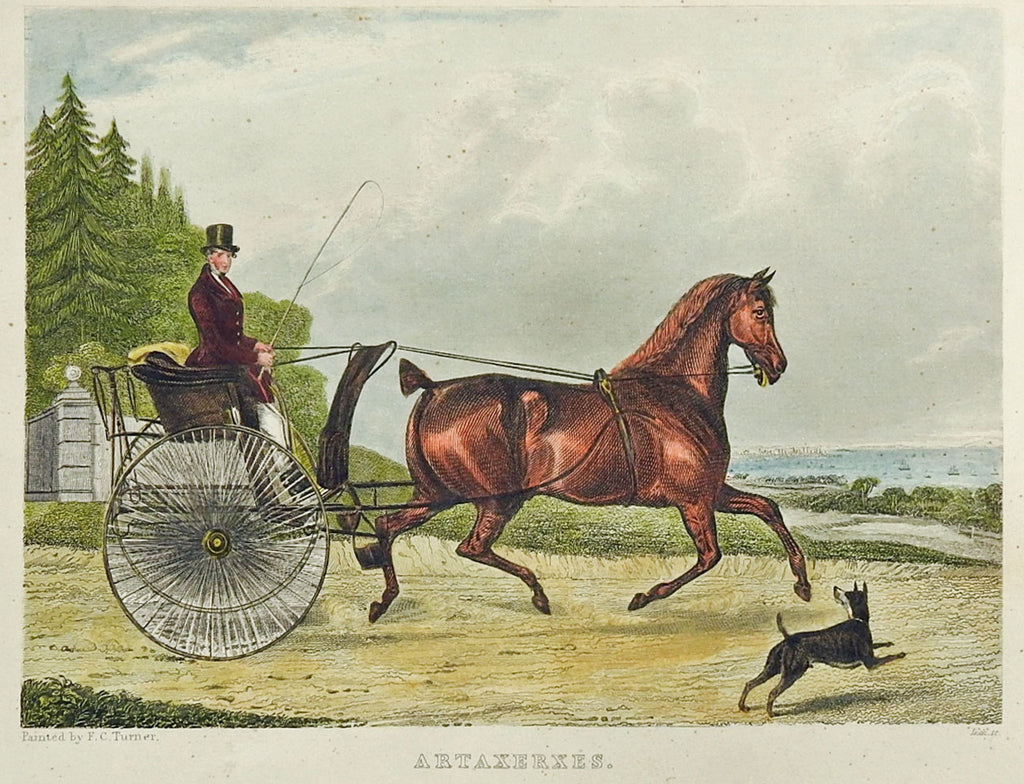 1839 Engraving Horse & Curricle
