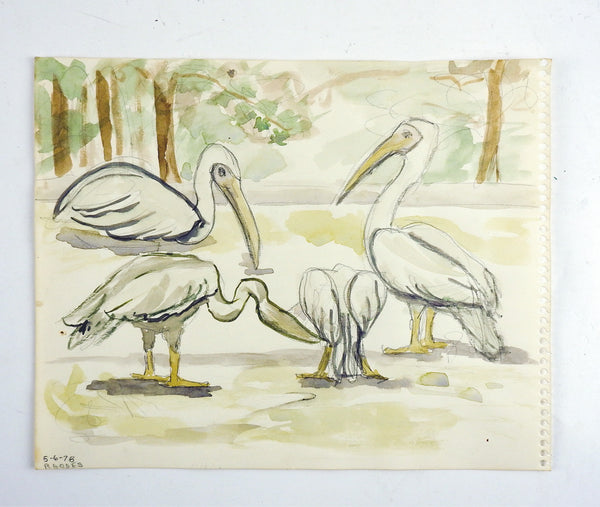 Pelicans of Greece Watercolor Study Painting