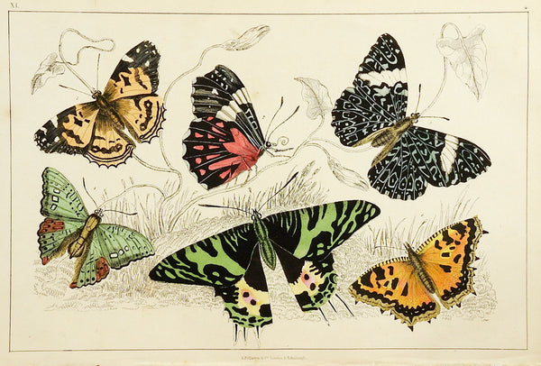 1860's Butterfly Engraving