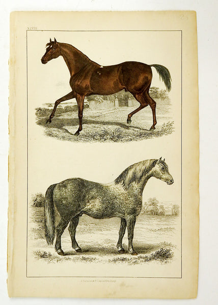 1860's Engraving Of Horses