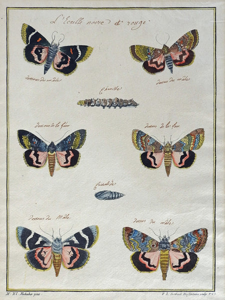 Hand-Colored Antique Moth Etching, 1790