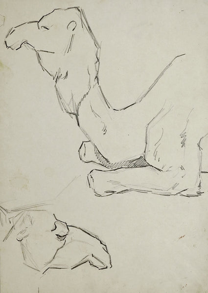 Camel Study Drawa by George Baer