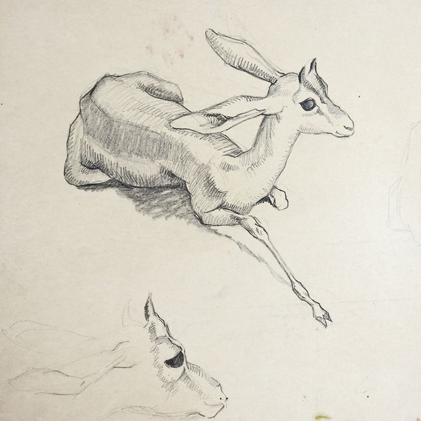 Gazelle Vintage Pencil Study Drawing By George Baer