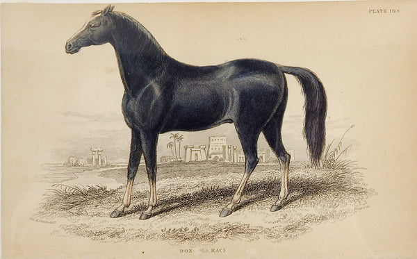 1834 Equine Engraving