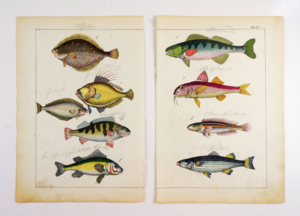 Pair of Colorful Fish Woodcut Prints