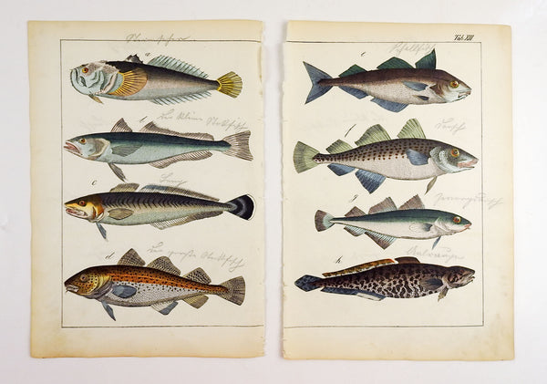 Hand Colored Fish Woodcut Prints - A Pair
