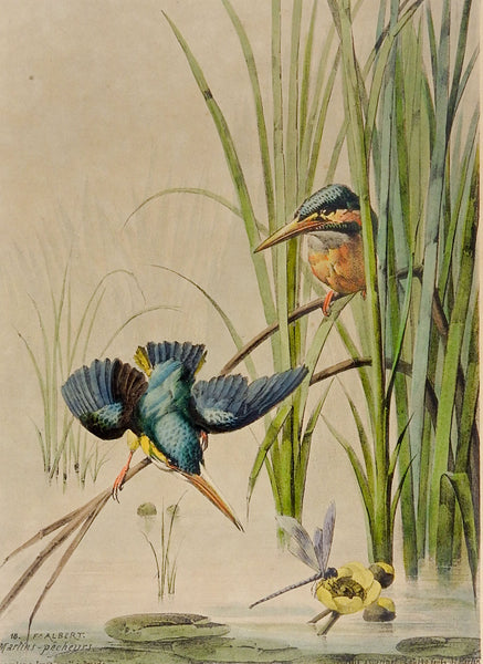 1880's Kingfisher Lithograph Print