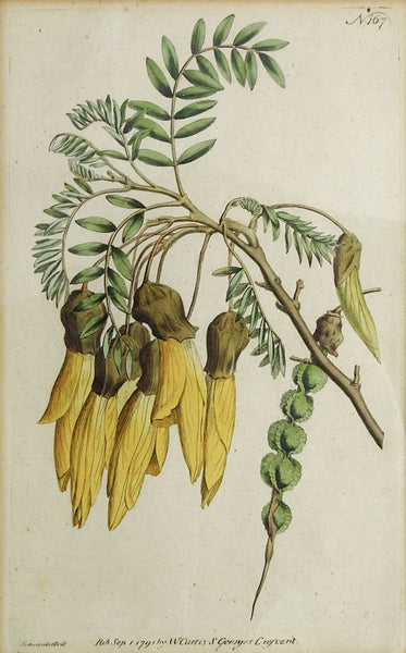 1791 Botanical Antique Engravings- A Pair