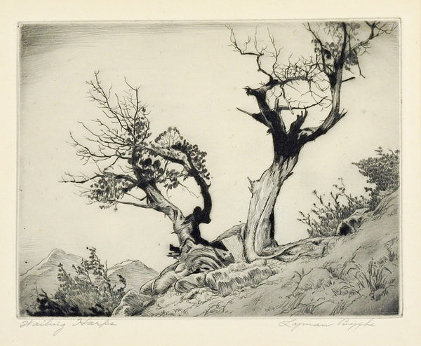 Lyman Byxbe Etching  Rocky Mt. Junipers