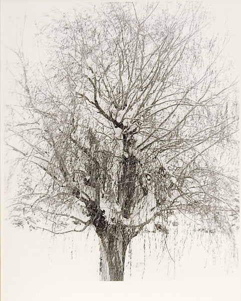 Winter Tree Photograph