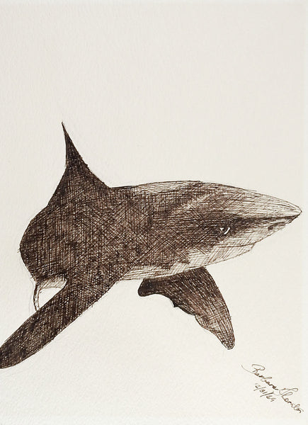 Shark Pen & Ink Drawing