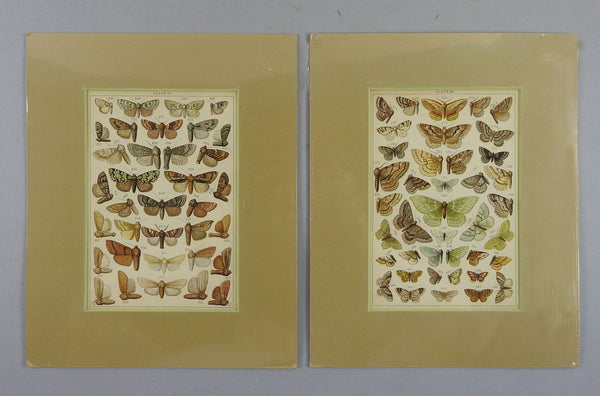 1885 Antique Lithographs of Moths - Set of 2