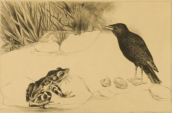 Black Bird & Frog Lithograph