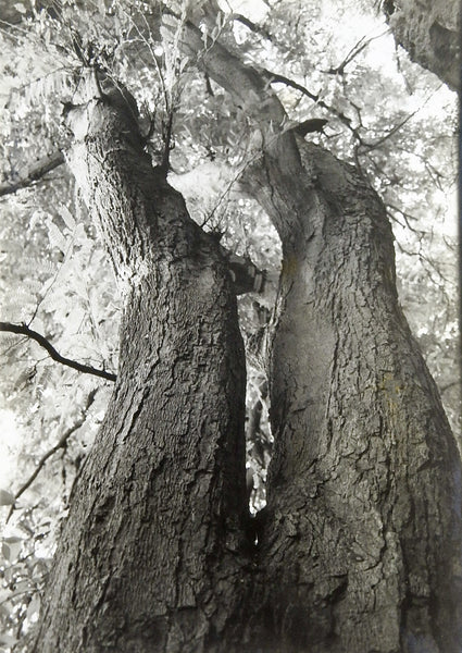 Photograph of Curving Tree