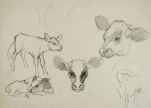 Pencil Study Of Calves Drawing