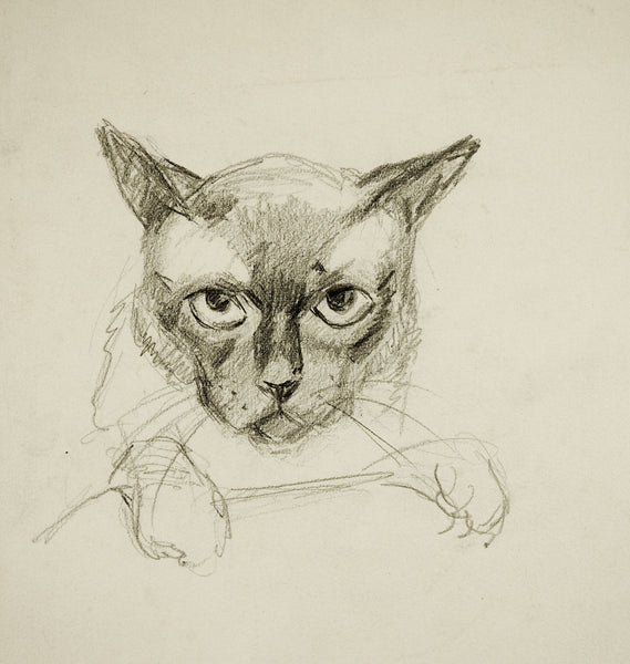 Pencil Study of Cat Drawing