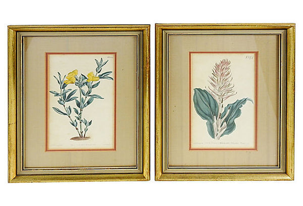 Pair of Botanical Etchings