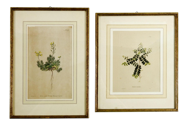 1823 Antique Botanical Engravings - A Pair