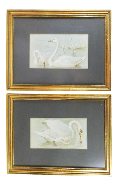 Antique 1914 Swan Lithographs a Pair