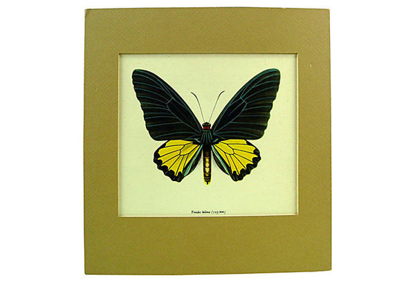 Butterfly Lithograph - Artifax antiques & design