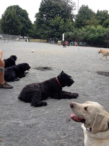 Friends of Marblehead's Dog Park