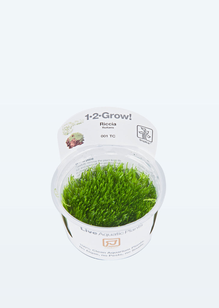 1-2-Grow! Riccia fluitans plant from Tropica products online in Dubai and Abu Dhabi UAE